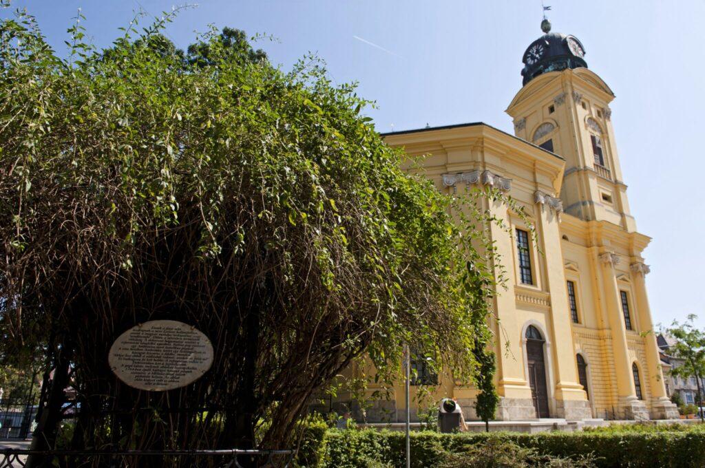 A debreceni Lyceum-fa a Nagytemplom mellett